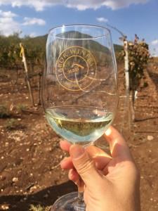 Винодельня Тавор